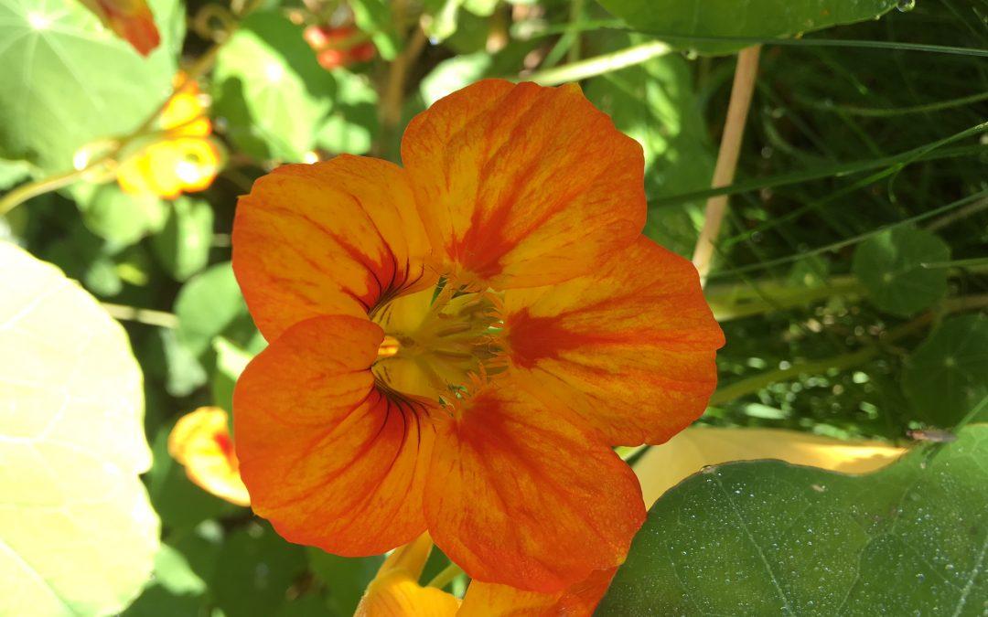 In meinem Garten…